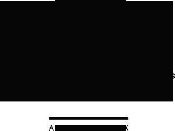 logo3 Branding Harmony